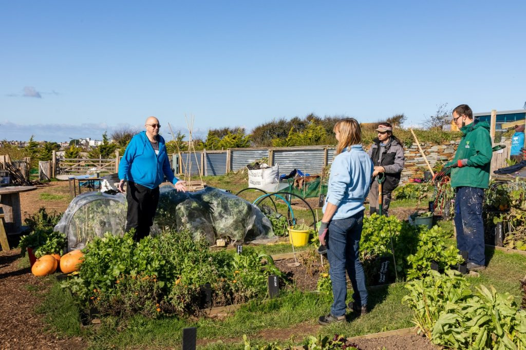 Harvest time at Newquay Community Orchard